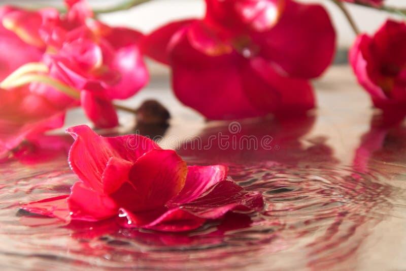 Orchid?e dans l'eau photographie stock