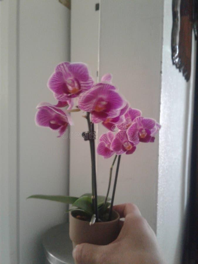 Orchid?e photos stock