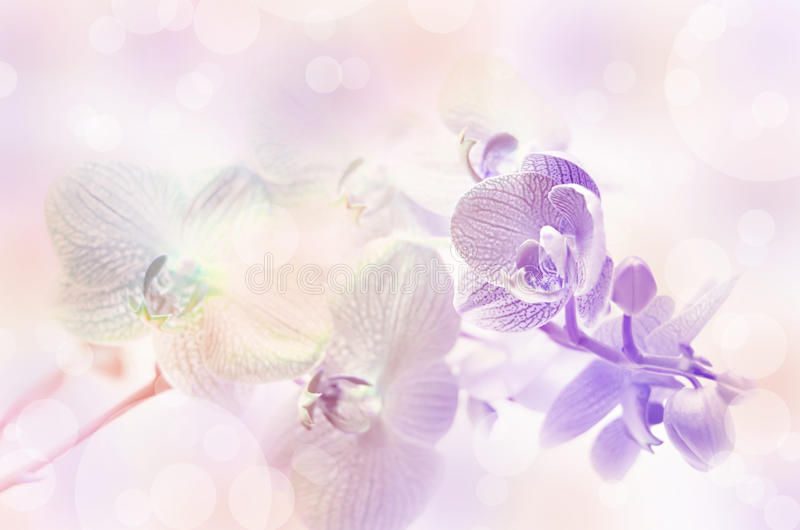 Download Orchid flowers. stock image. Image of delicate, love - 41456773
