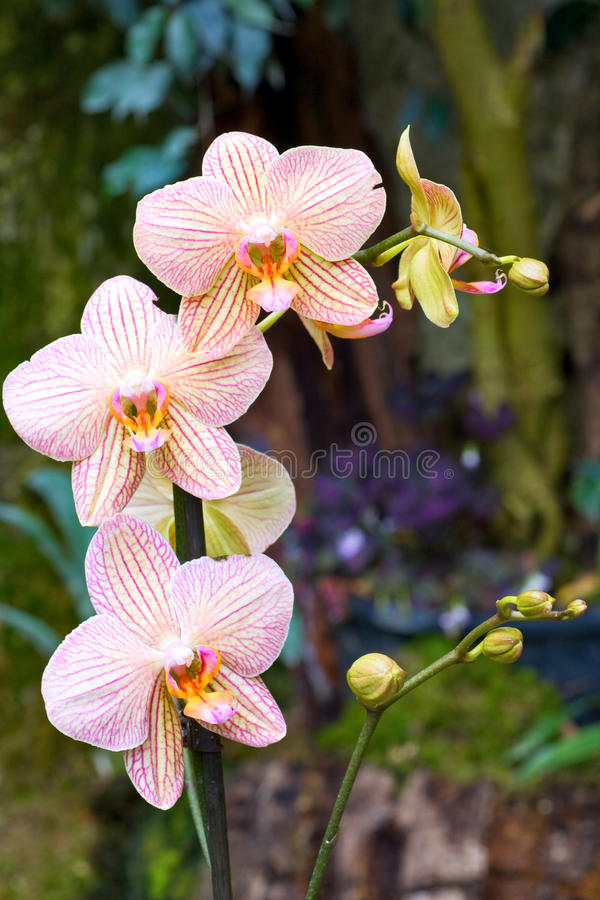 Free Orchid Flower Stock Photos - 10388183