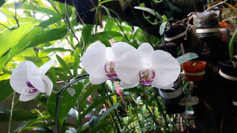 Orchid Flower immagini stock libere da diritti