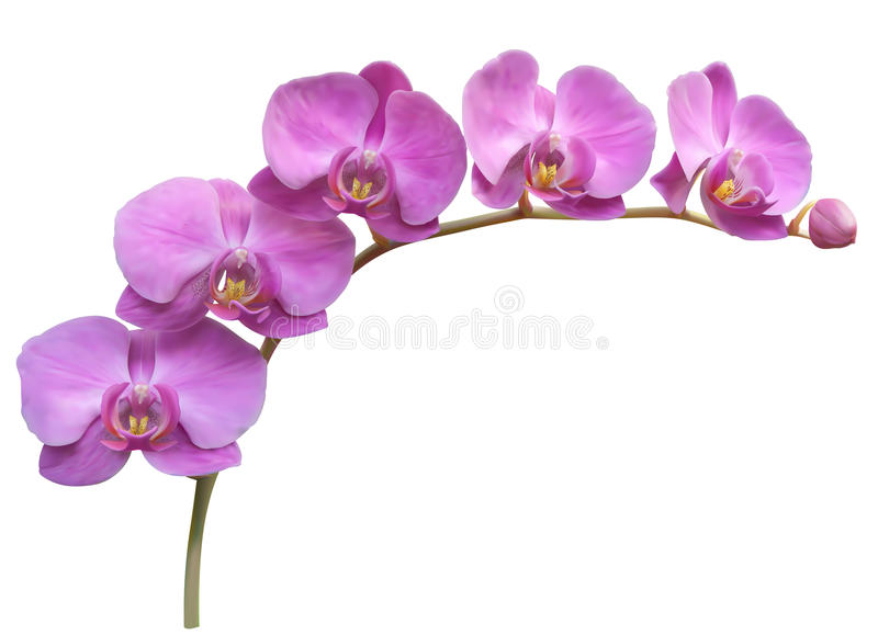 Orchid flower background royalty free illustration
