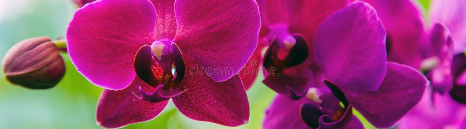 Orchid flower banners stock photos