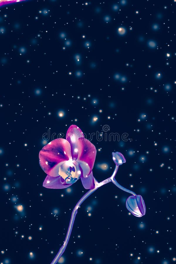 Orchid flower in bloom, abstract floral art background stock images