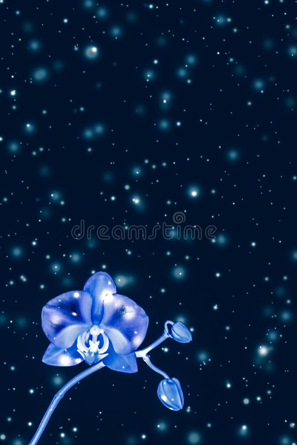Orchid flower in bloom, abstract floral art background stock image