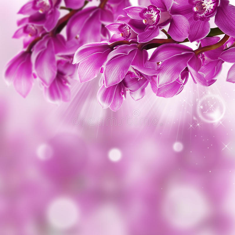 Orchid Flower Border Design Close Up Stock Photo Image