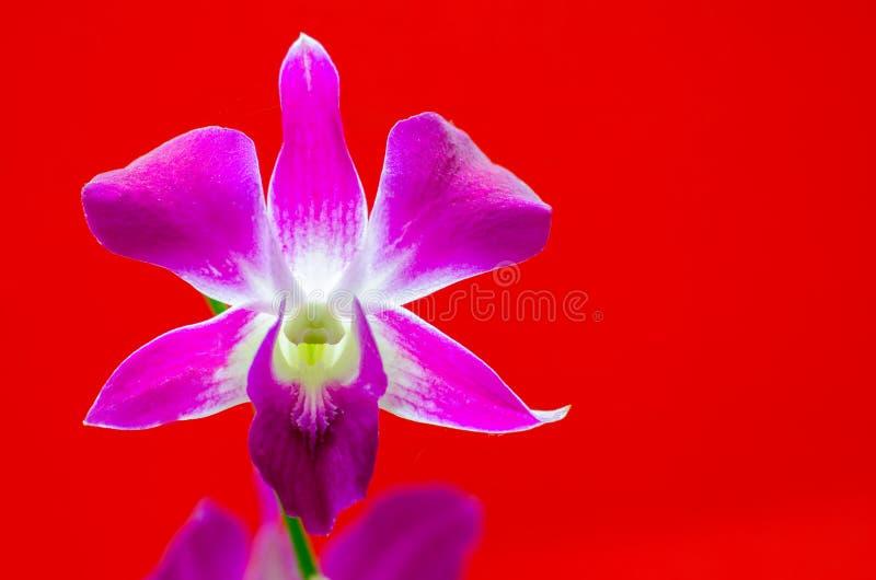 Download Orchid flower stock image. Image of design, flower, bloom - 33142645