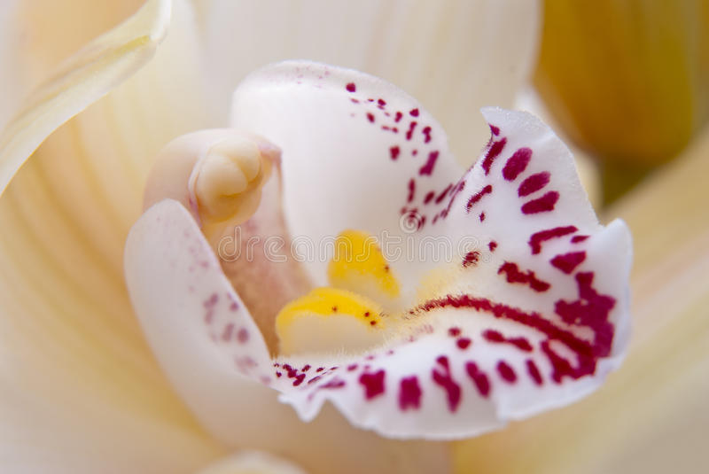 Download Orchid Flower Close-up, Selective Stock Photo - Image: 19413120