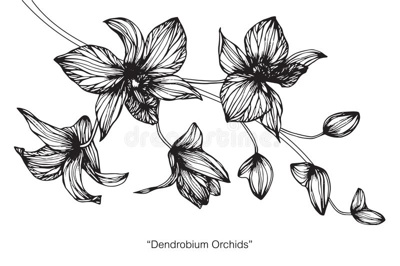 Orchid Flower Drawing And Sketch. Stock Illustration - Illustration ...