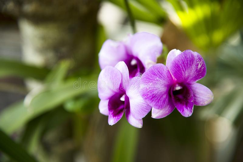 Orchid flower on the garden stock photo