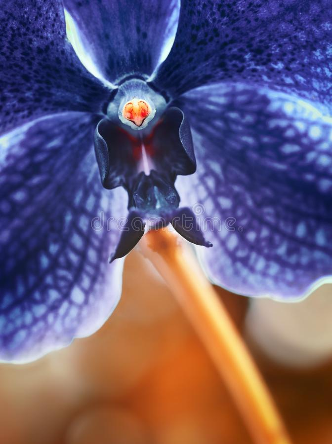 Orchid flower in garden. Violet flower background royalty free stock photography