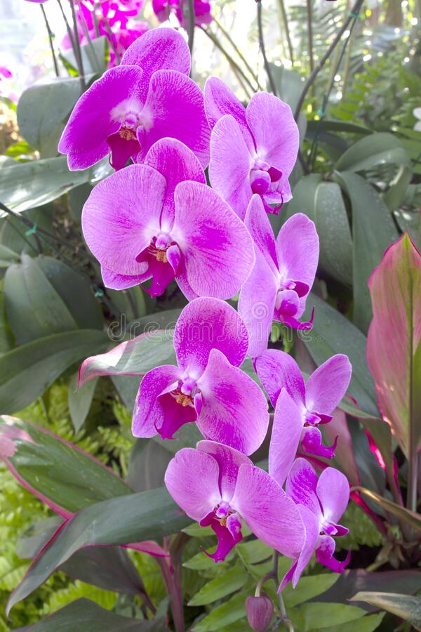 Orchid flower in garden at winter or spring day.  royalty free stock images