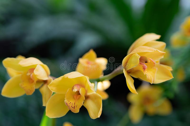 Orchid flower in garden at winter or spring day for postcard beauty and agriculture idea concept design. Phalaenopsis orchid royalty free stock photography