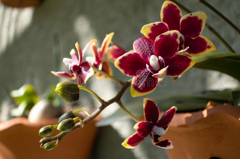 The flower detail of the small orchid royalty free stock image