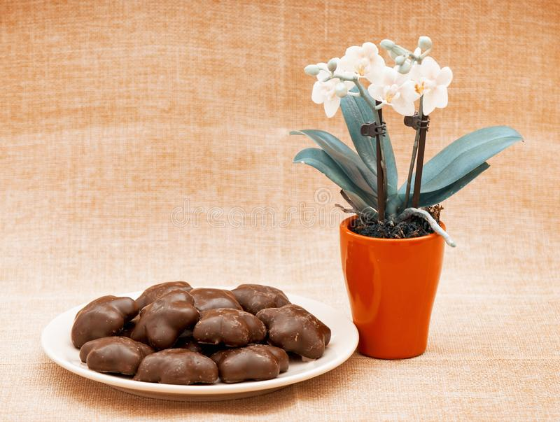 Orchid flower and gingerbread cookies. On the table. Teal and orange photo filter royalty free stock image