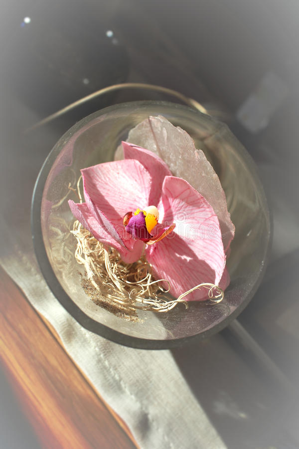 Download Orchid Flower In Glass Bowl Stock Photo - Image: 21657570