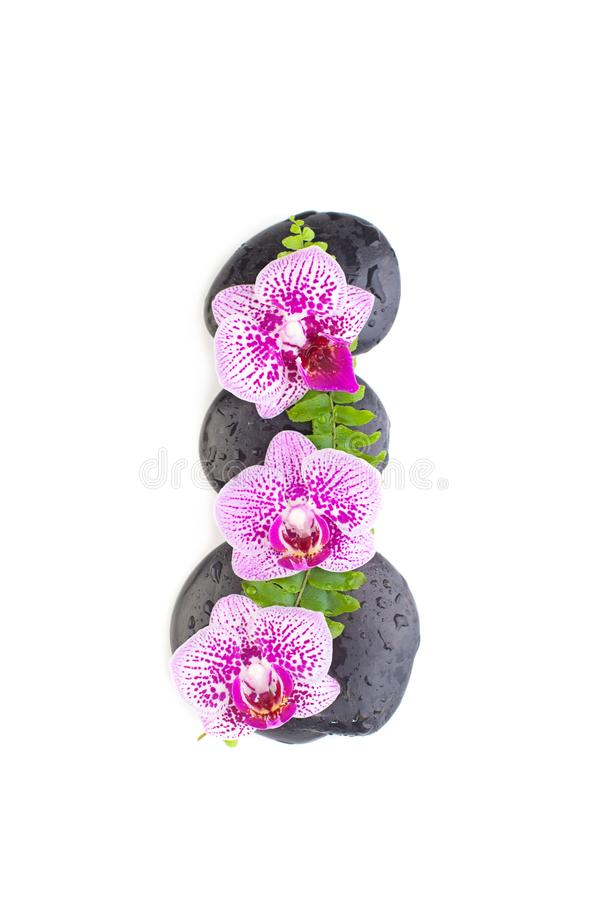 Orchid flower, green leaves and zen back stones isolated on white.  stock photography