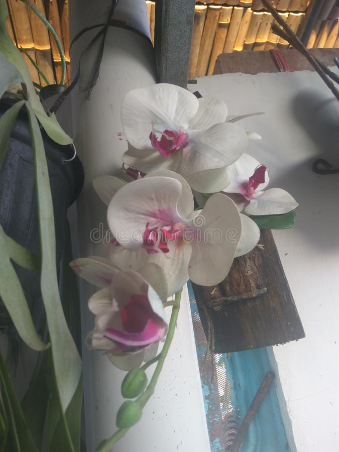 Orchid flower hung in the house. Orchid is a beautiful flowering plant that can add to the aesthetics of the house stock photo