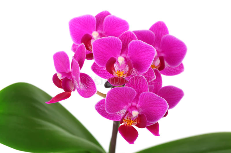 Download Orchid Stock Photos - Image: 29760363