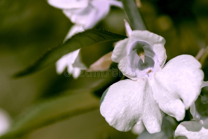 Orchid flower macro. Close up stock images