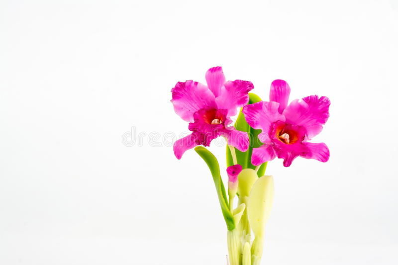 ORCHID Flower Plant in Pot Dollhouse Miniatures Garden stock photo