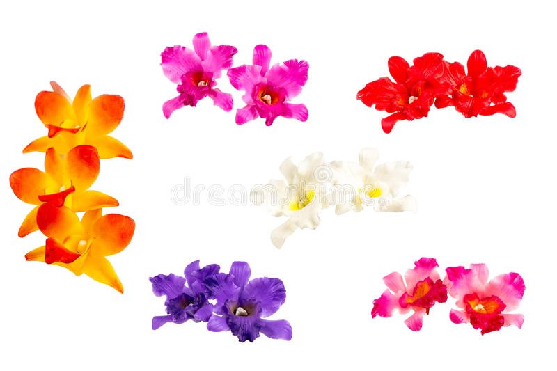 ORCHID Flower Plant on white background.  stock photo
