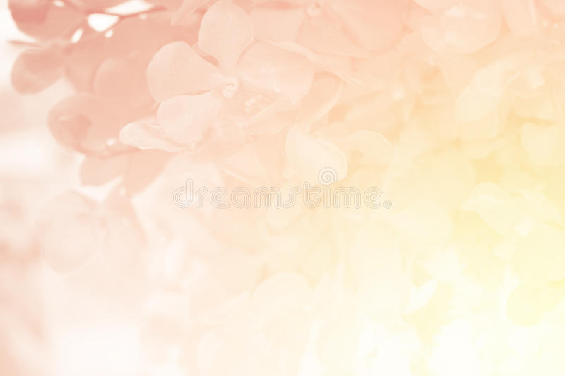 Orchid flower in sweet soft color royalty free stock images