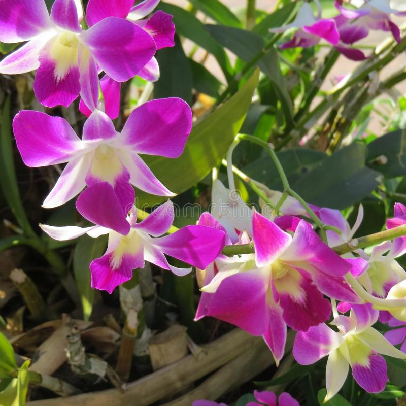 Orchid flower from Thailand stock photos