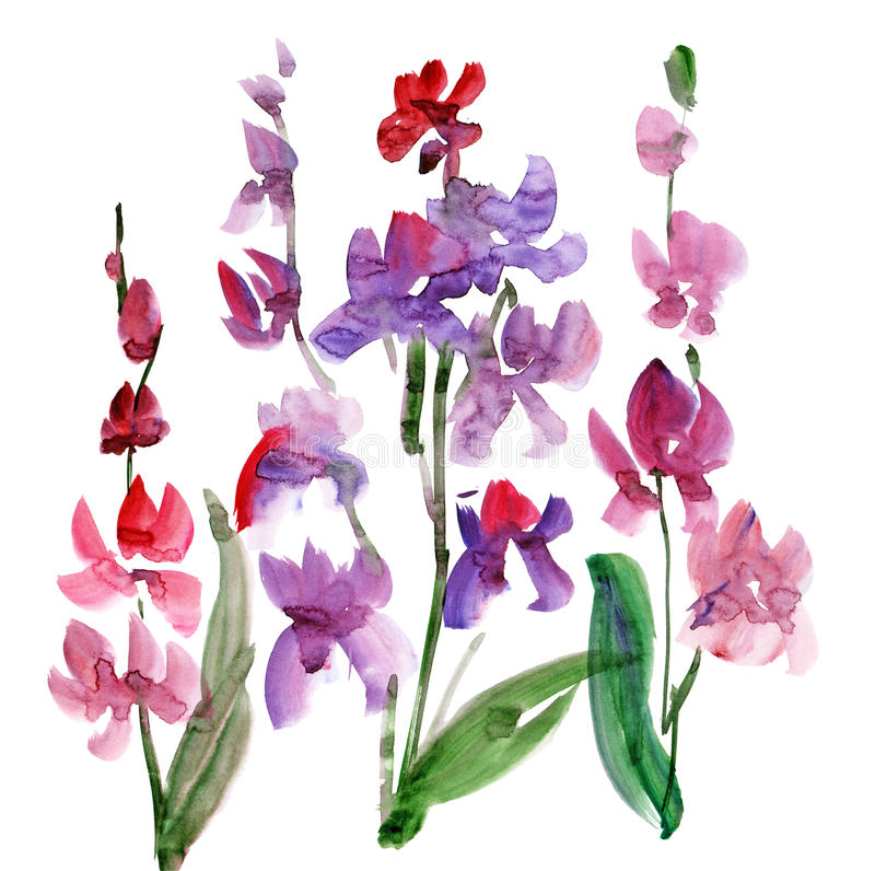 Download Orchid Flower watercolour stock illustration. Image of drawing - 23940741