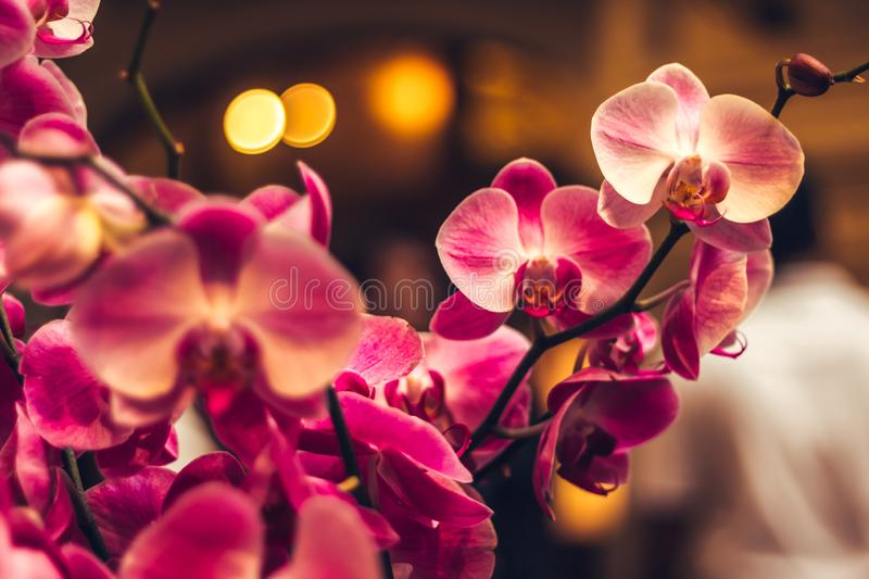 Orchid flower in winter or spring day tropical garden background in Thailand. Use for postcard beauty stock photography