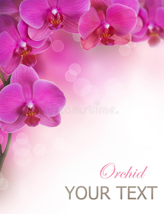Download Orchid Flowers stock photo. Image of holidays, isolated - 22268306