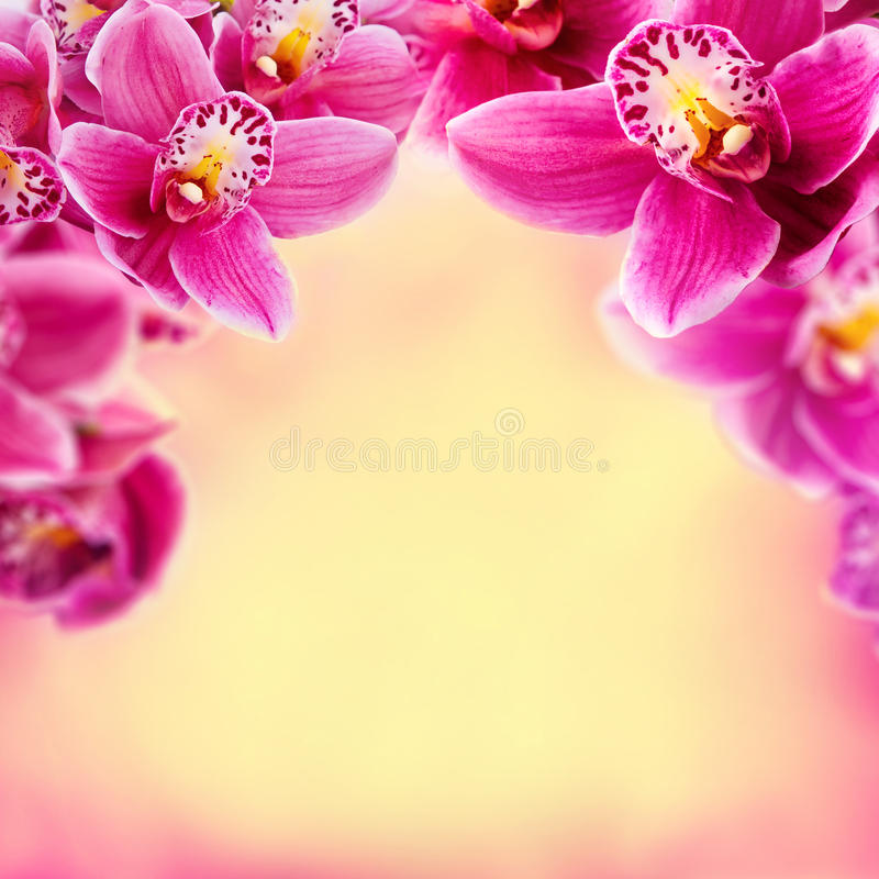 Orchid flowers frame stock photo. Image of elegant, decorative ...