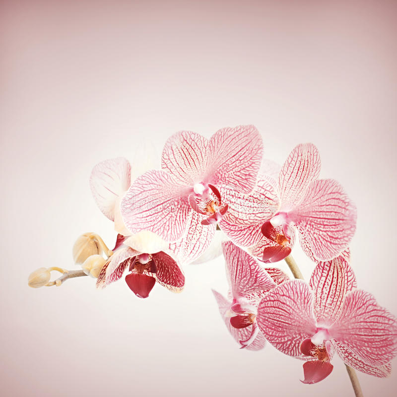 Download Orchid flowers. stock image. Image of fragility, environment - 41456763