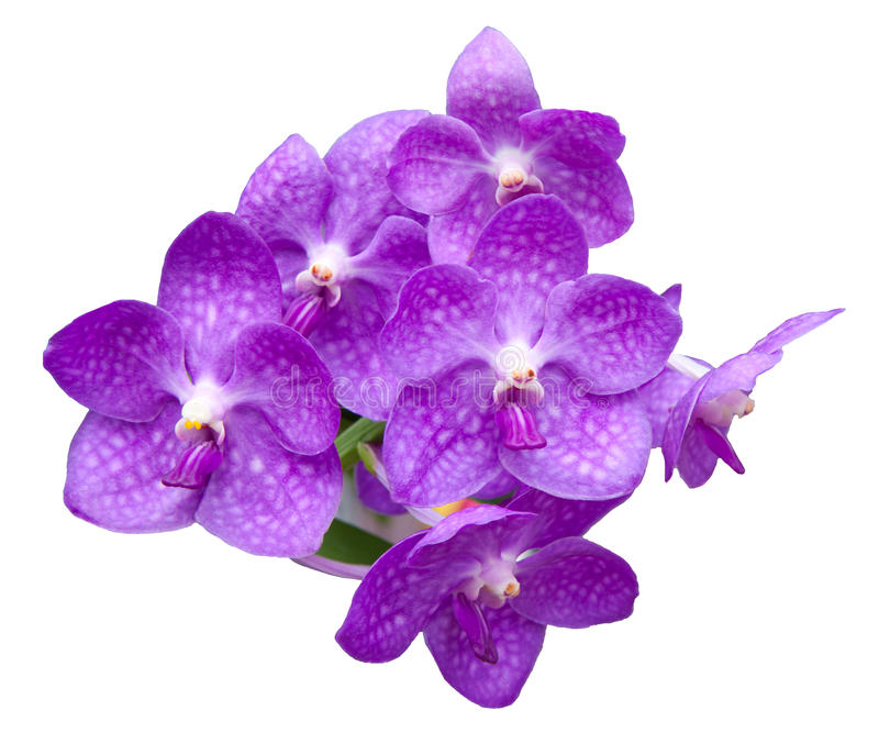 Orchid Flowers Bouquet Isolated On White Stock Photo - Image of ...