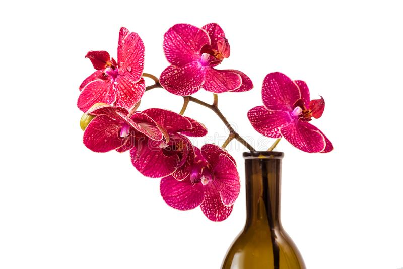 Orchid flowers. A branch of red flowers stock photography
