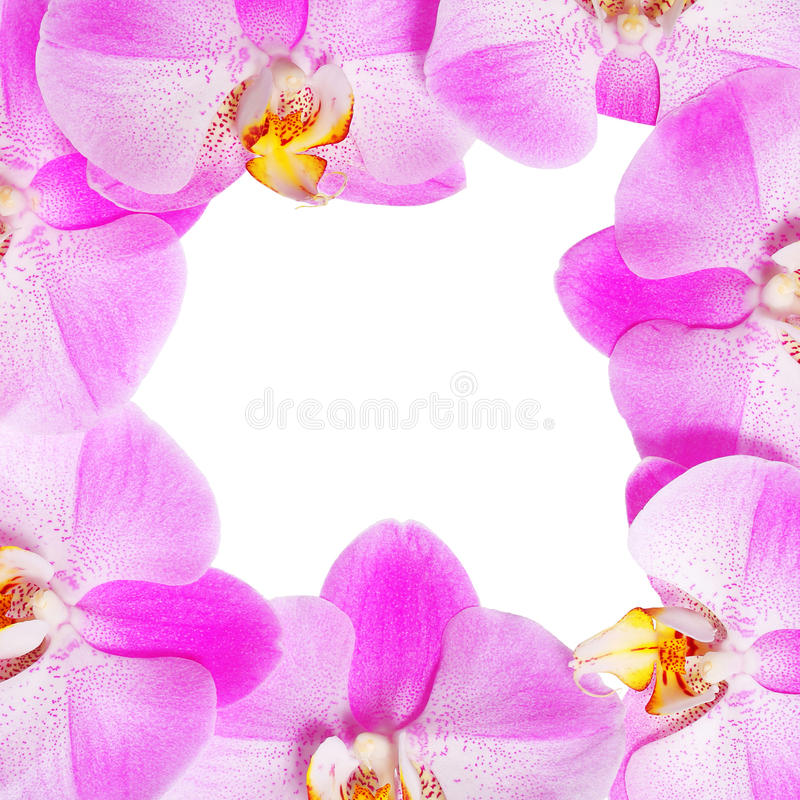 Orchid Flowers Frame isolated. Hot Pink Flowers royalty free stock images