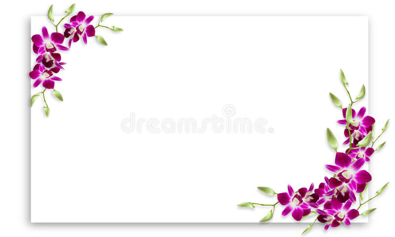 Orchid flowers frame with white copy space. royalty free stock images