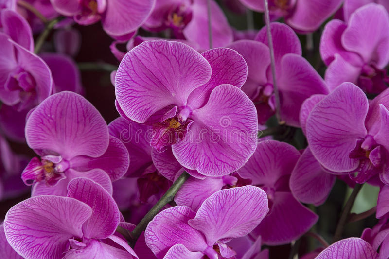 Orchid flowers. In the full bloom stock images