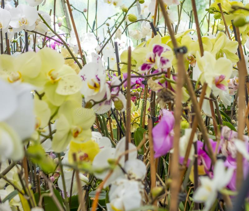 Orchid flowers. Full frame picture showing various orchid flowers royalty free stock photo