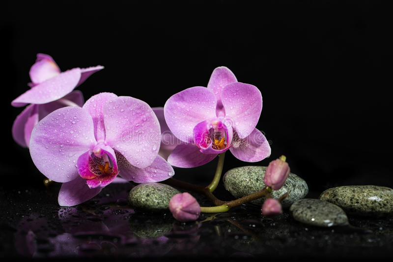 Orchid flowers and spa stones on wet background. stock photo