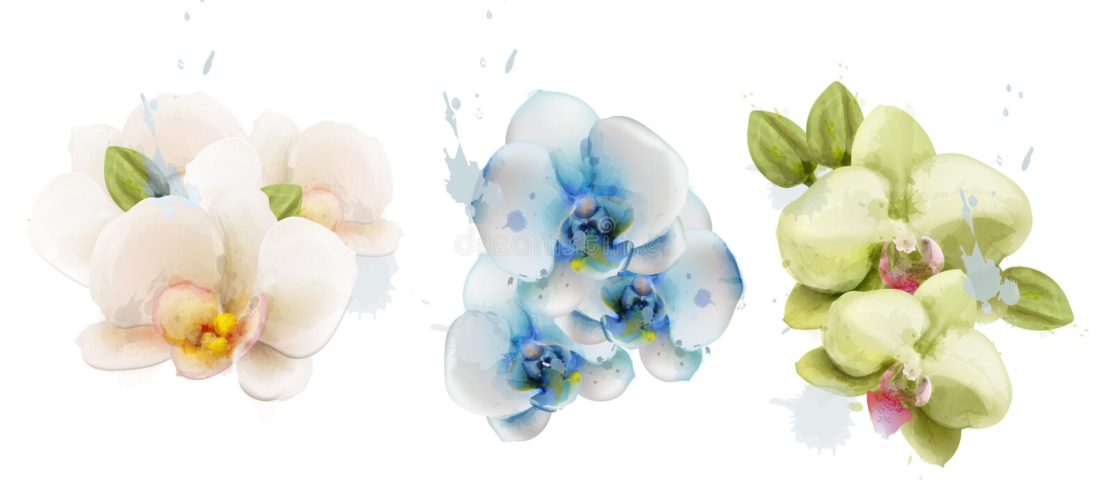 Orchid flowers watercolor isolated Vector. Delicate floral decorations. Orchid flowers watercolor isolated Vector. Delicate floral decoration royalty free illustration
