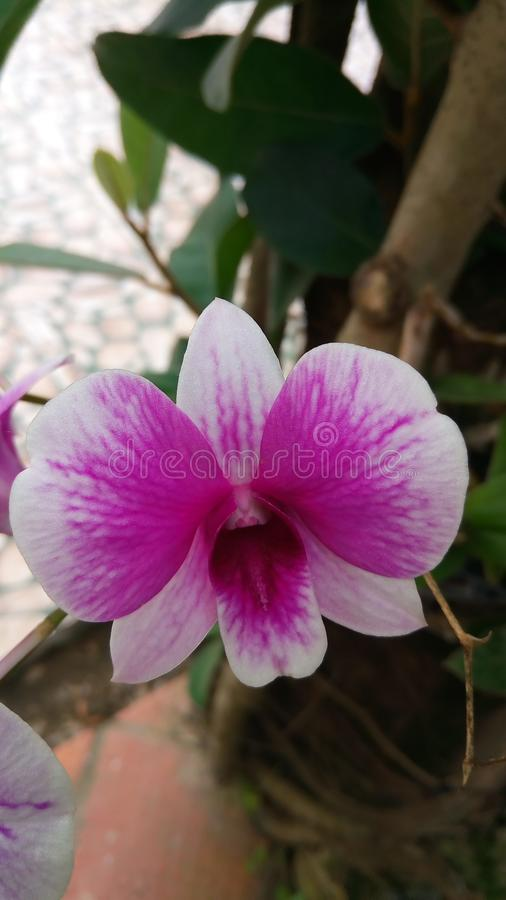 Orchid forest royalty free stock image