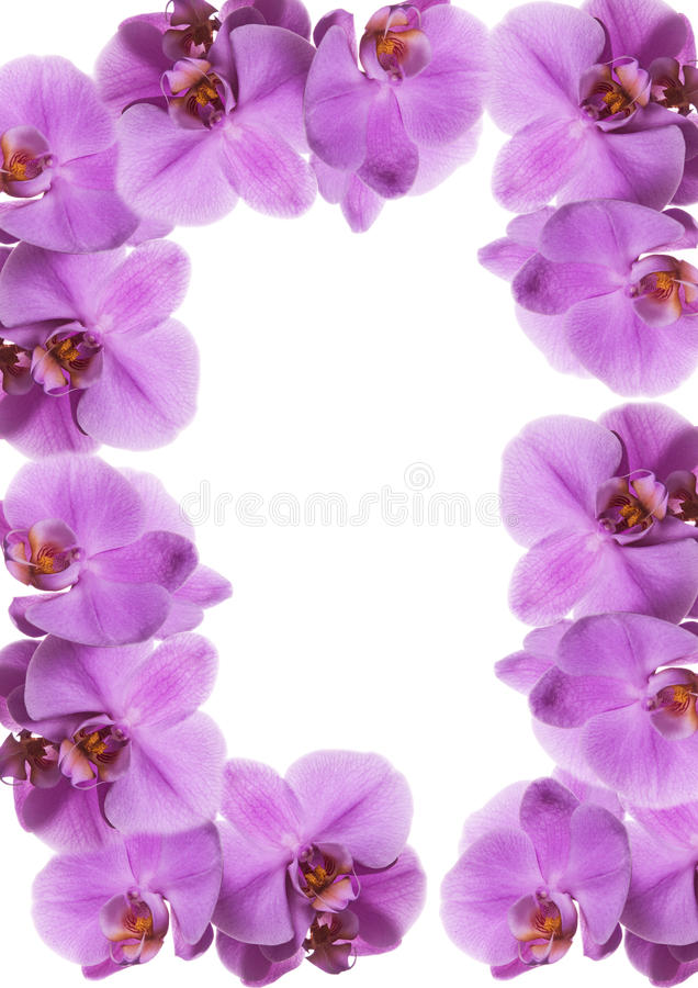 Orchid frame. Flower frame make with orchid royalty free stock photo