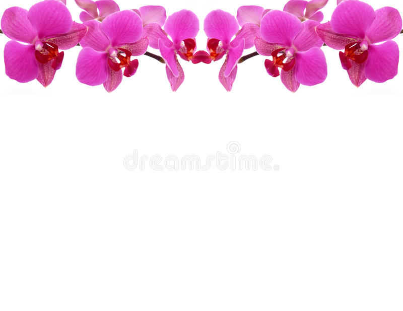 Orchid frame stock image. Image of card, bouquet, frames - 25549059