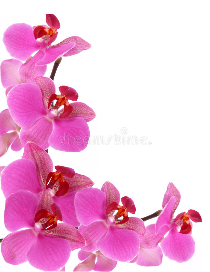 Orchid frame stock photo. Image of pink, gardening, cards - 25574682