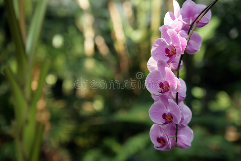 Download Orchid in garden stock image. Image of bloom, atrium, green - 2841141