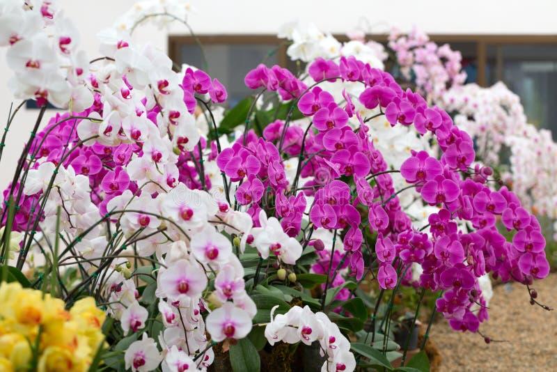 Gentil Orchid Garden