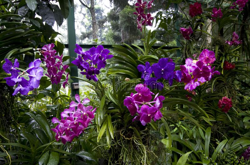 Orchid garden royalty free stock photo