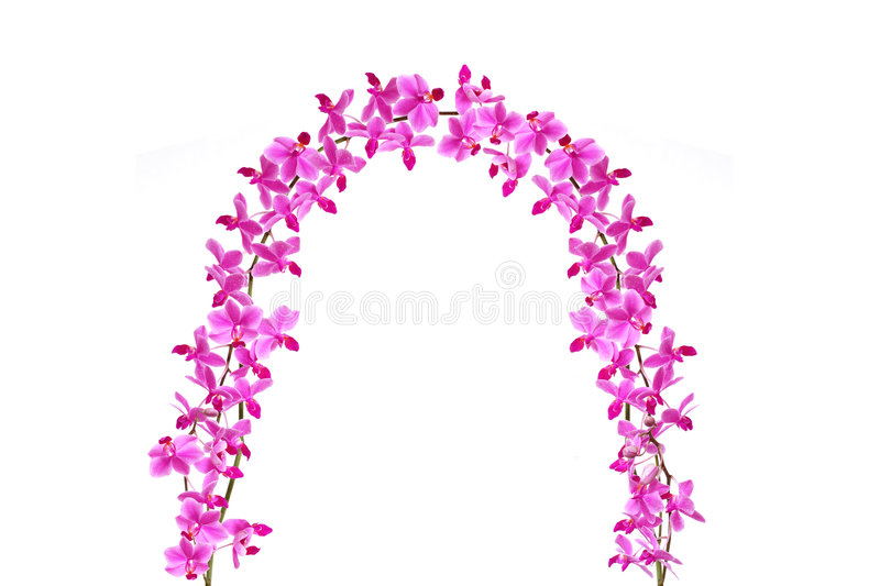 Download Orchid Gate stock illustration. Illustration of beautiful - 7661788