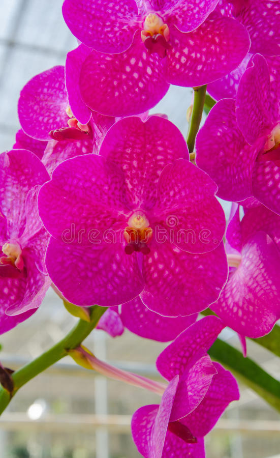 Orchid on green background.  royalty free stock photography